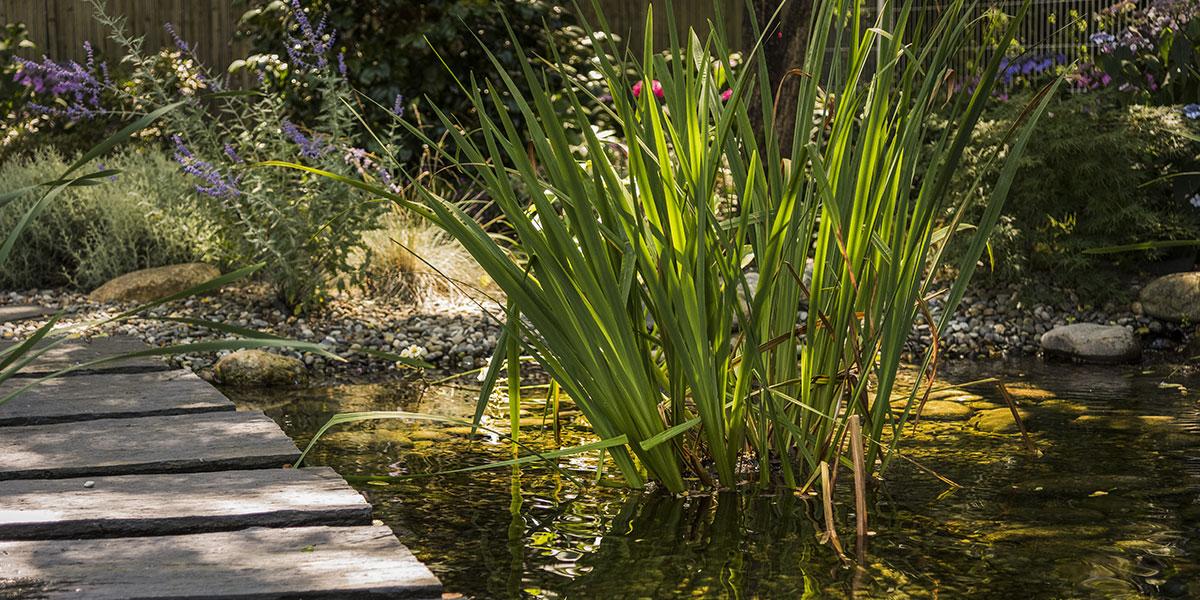 Bassin avec une plante aquatique
