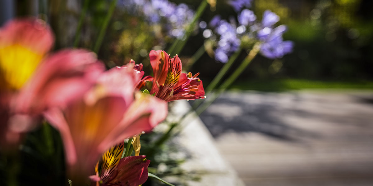 Plantation fleur