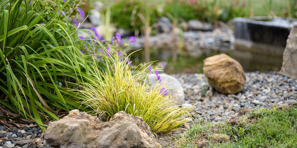 Bassin fleuri paysagiste Pau